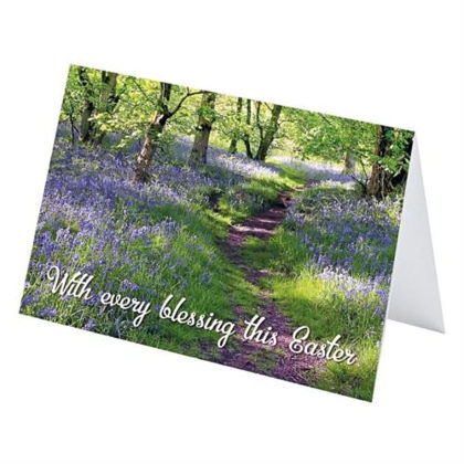 Picture of Bluebell wood (4)