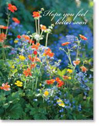 Picture of Orange and blue flowers