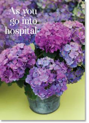 Picture of Hydrangeas in pots - as you go into hospital