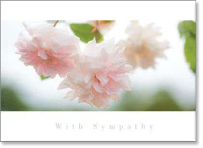 Picture of Inspire - Soft pink roses