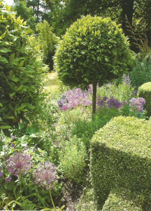 Picture of Garden topiary