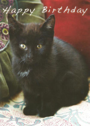 Picture of Black kitten on cushions