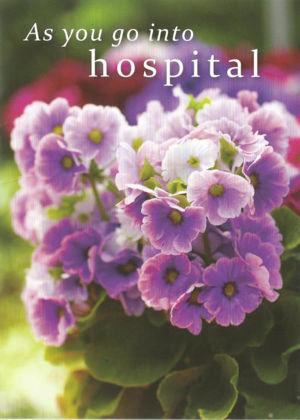 Picture of Mauve pot plant - As you go into hospita